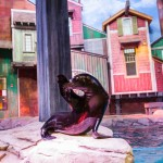 All Sea Lions are either rescues or were born at the Aquarium